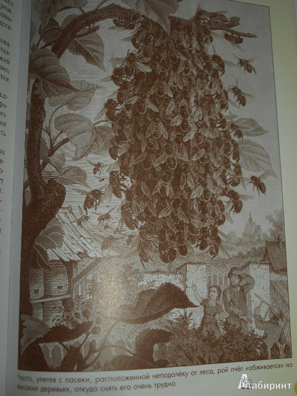Иллюстрация 38 из 52 для Домашние животные - Светлана Лаврова | Лабиринт - книги. Источник: Ded Sergej