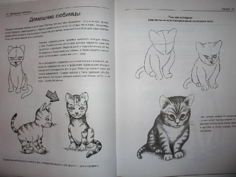 Иллюстрация 10 из 21 для Рисуем животных - Вальтер Хальбингер | Лабиринт - книги. Источник: Tiger.