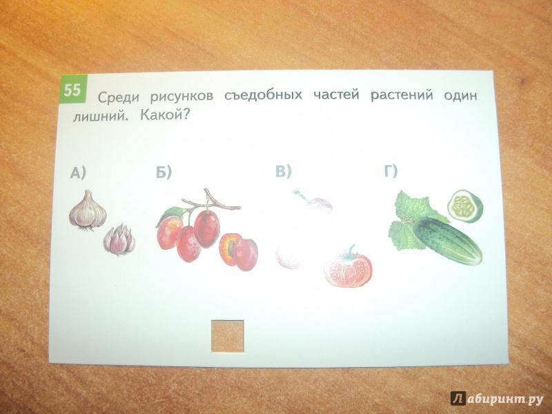 Иллюстрация 5 из 5 для Окружающий мир. 1-4 классы. Комплект тестовых карточек для начальной школы. ФГОС - Зоя Клепинина   Лабиринт - книги. Источник: mari-nulya