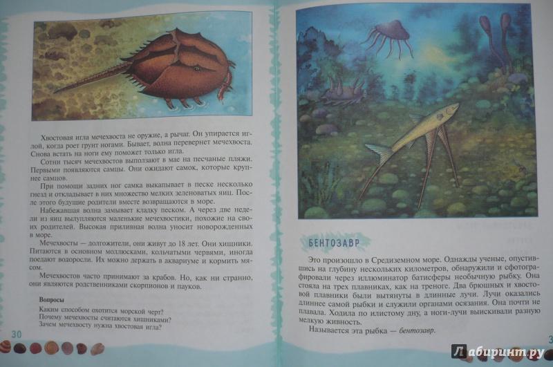 Иллюстрация 9 из 39 для Тайны морского дна: книга для чтения детям - Геннадий Целищев | Лабиринт - книги. Источник: Астанина  Олеся