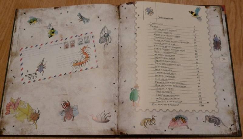 Иллюстрация 16 из 106 для Письма насекомых - Ольга Кувыкина | Лабиринт - книги. Источник: Pam