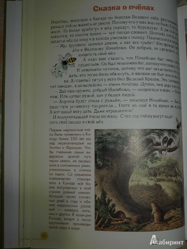 Иллюстрация 37 из 52 для Домашние животные - Светлана Лаврова | Лабиринт - книги. Источник: Ded Sergej