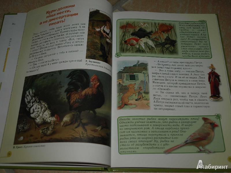 Иллюстрация 23 из 52 для Домашние животные - Светлана Лаврова | Лабиринт - книги. Источник: Гусева  Анна Сергеевна