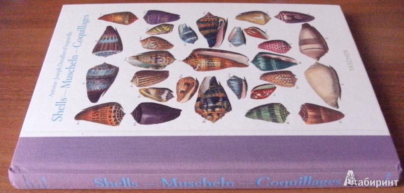 Иллюстрация 2 из 12 для Shell - Muscheln - Coquillages - Carpita, Willmann, Willmann | Лабиринт - книги. Источник: Комаров Владимир