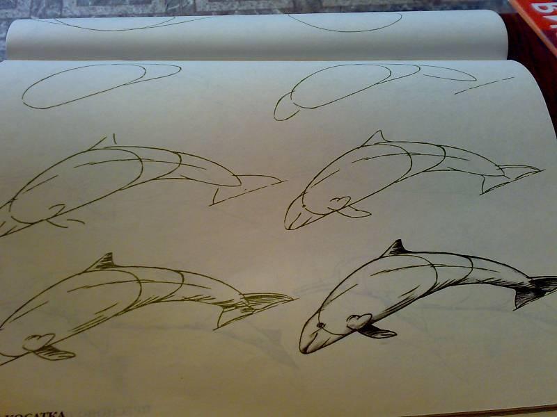 Иллюстрация 29 из 29 для Рисуем 50 акул, китов и других морских животных - Эймис, Бадд | Лабиринт - книги. Источник: Юлия7