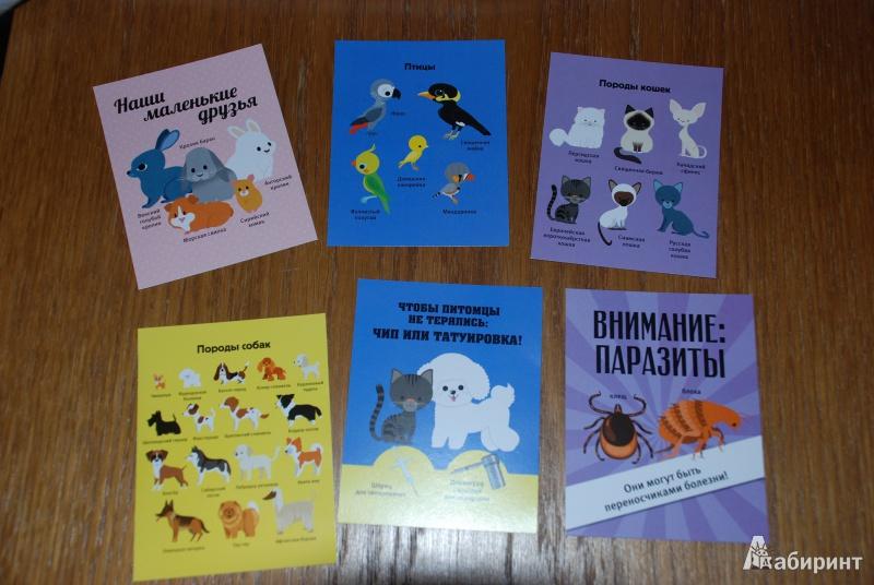 Иллюстрация 9 из 19 для Играем в ветеринара - Анн-Софи Боманн | Лабиринт - книги. Источник: Плахина  Ирина