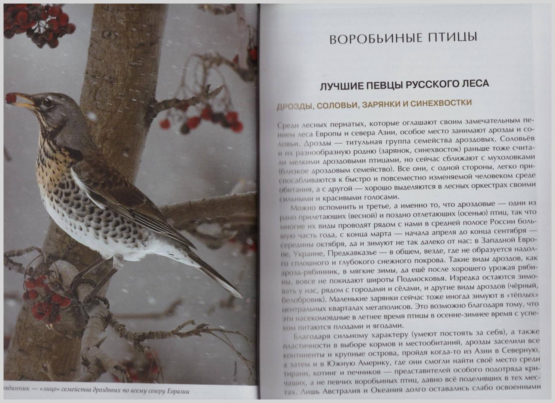Иллюстрация 31 из 51 для Лесные птицы России - Константин Михайлов   Лабиринт - книги. Источник: LanaEr