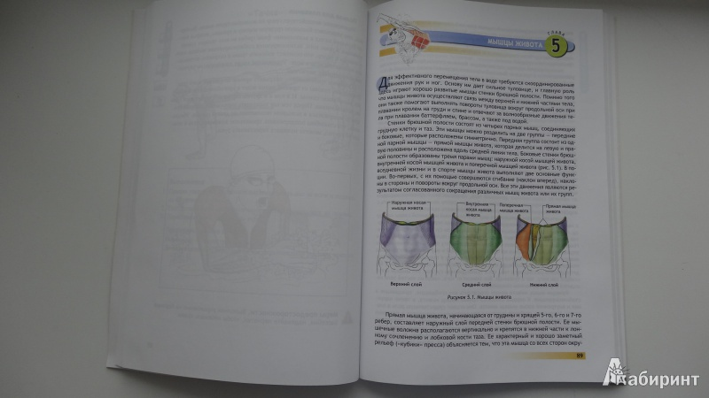 Иллюстрация 7 из 25 для Анатомия плавания - Йен Маклауд | Лабиринт - книги. Источник: Серебренникова  Наталья