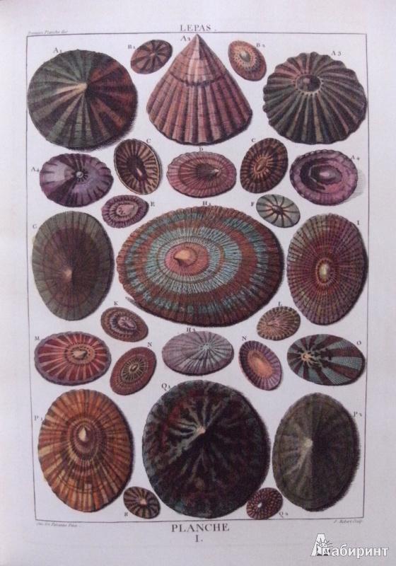 Иллюстрация 6 из 12 для Shell - Muscheln - Coquillages - Carpita, Willmann, Willmann | Лабиринт - книги. Источник: Комаров Владимир