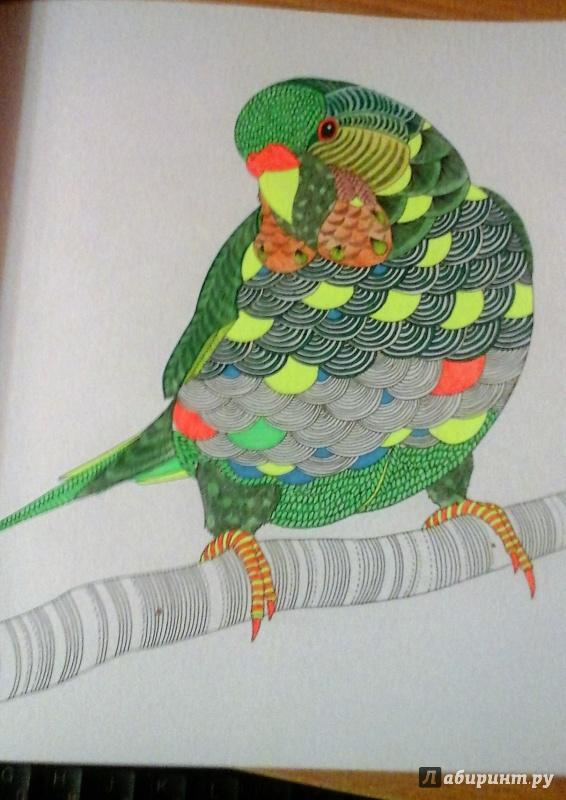 Иллюстрация 48 из 61 для В царстве животных. Книга для ...