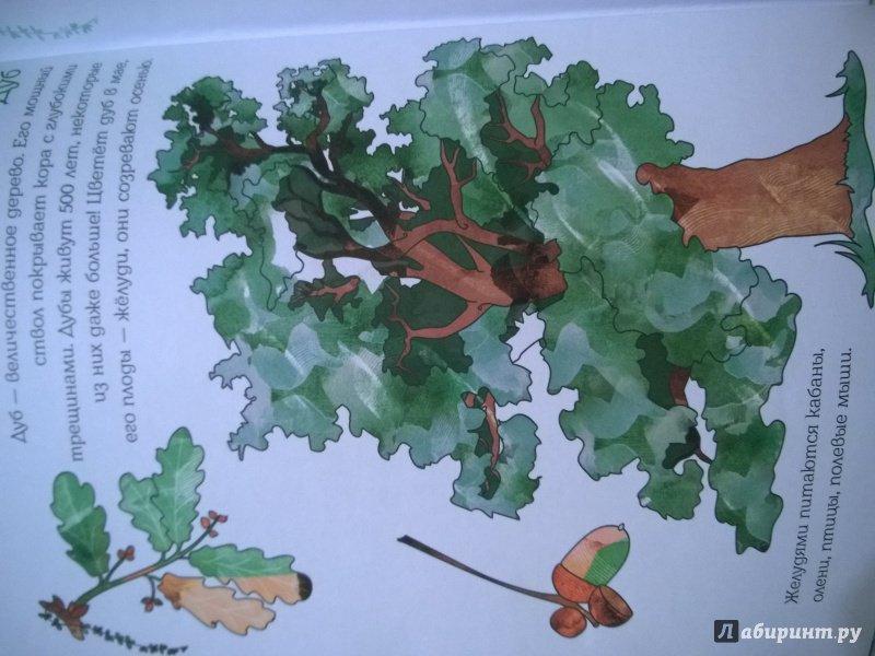 Иллюстрация 10 из 28 для Мой первый гербарий. Цветы и листья. ФГОС | Лабиринт - книги. Источник: kokorka