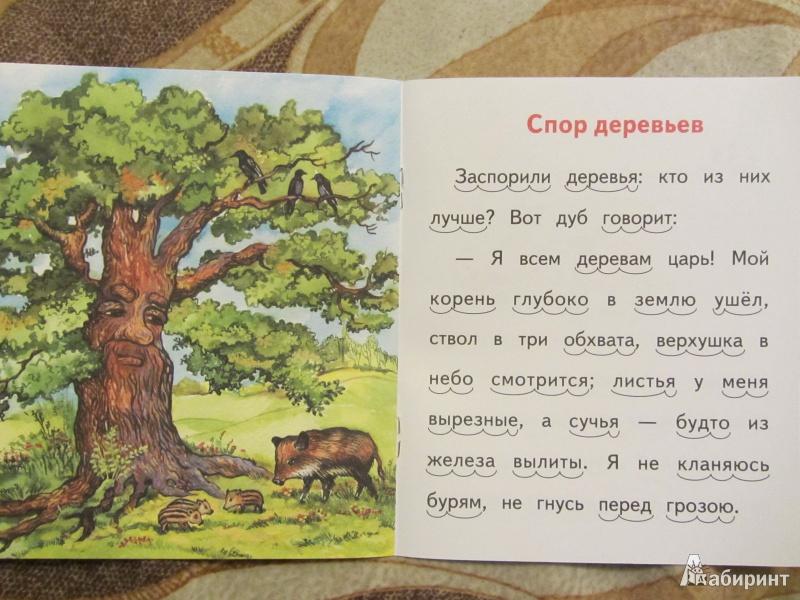 Спор деревьев картинки