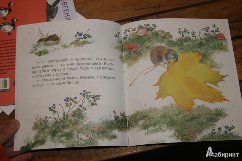 Иллюстрация 13 из 17 для Чарушинские зверята.  Комплект из 6 брошюр - Чарушин, Чарушина-Капустина   Лабиринт - книги. Источник: Кабанова  Ксения Викторовна