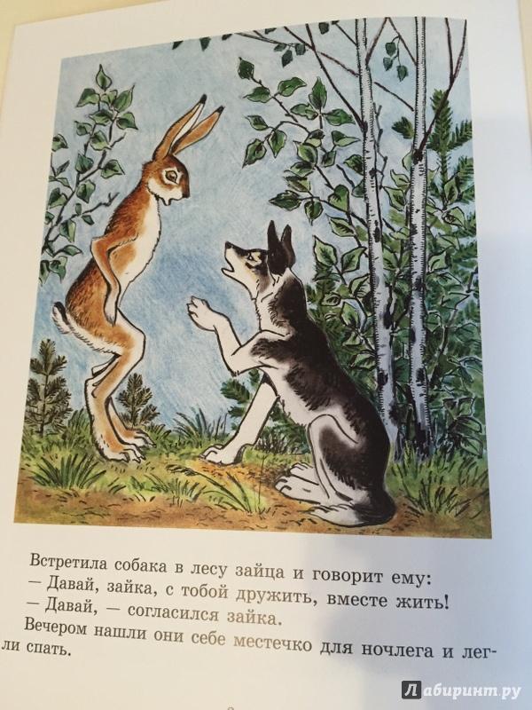 Сказка с картинками как собака друга искала