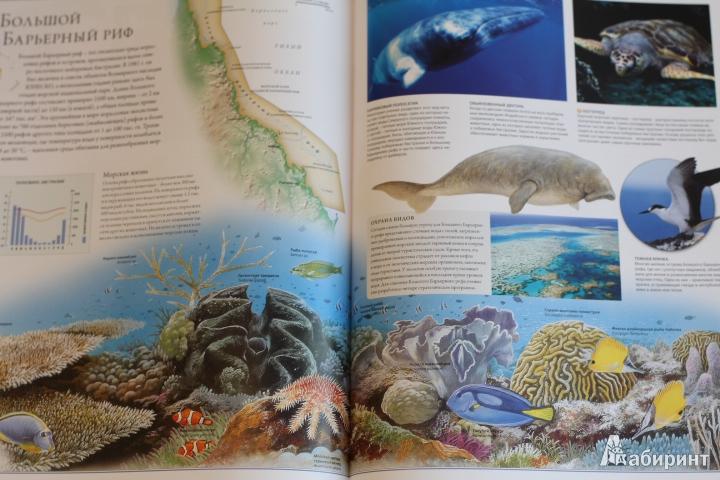 Иллюстрация 81 из 84 для Животный мир. Иллюстрированный атлас - Бамбарадения, Вудрафф, Гинзберг | Лабиринт - книги. Источник: LittleDragon