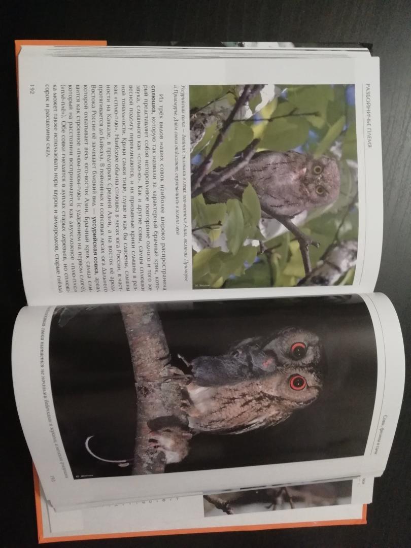 Иллюстрация 19 из 51 для Лесные птицы России - Константин Михайлов | Лабиринт - книги. Источник: Дергоусова  Анна Николаевна