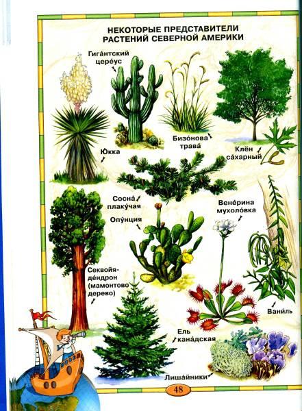 растения северной америки фото с названиями предложения услуги рядом