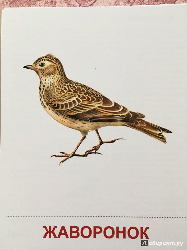 Картинка перелетных птиц с надписью