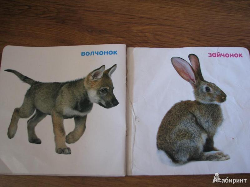 качестве зайчонок и волчонок картинки буквой