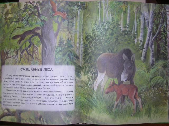 Иллюстрация 29 из 41 для Азбука живой природы - Александр Барков | Лабиринт - книги. Источник: Матюша