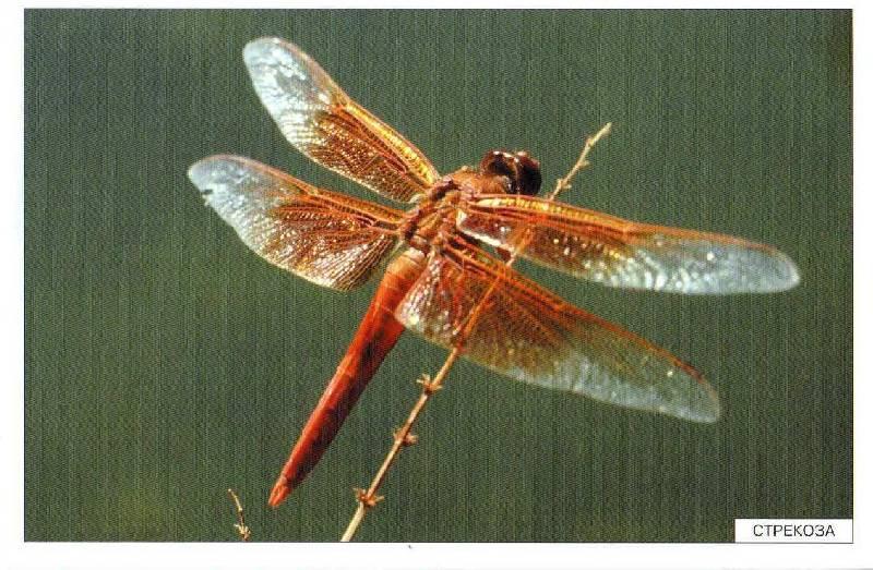 Иллюстрация 13 из 27 для Расскажите детям о насекомых - Э. Емельянова   Лабиринт - книги. Источник: С  М В