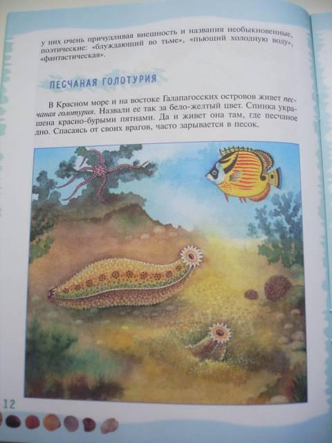 Иллюстрация 36 из 39 для Тайны морского дна: книга для чтения детям - Геннадий Целищев   Лабиринт - книги. Источник: Осьминожка