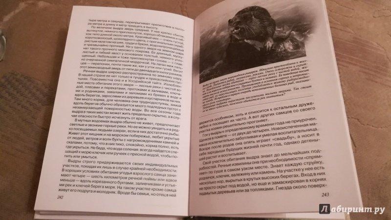 Иллюстрация 22 из 22 для Звери Уссурийской тайги - Сергей Кучеренко | Лабиринт - книги. Источник: Натаly