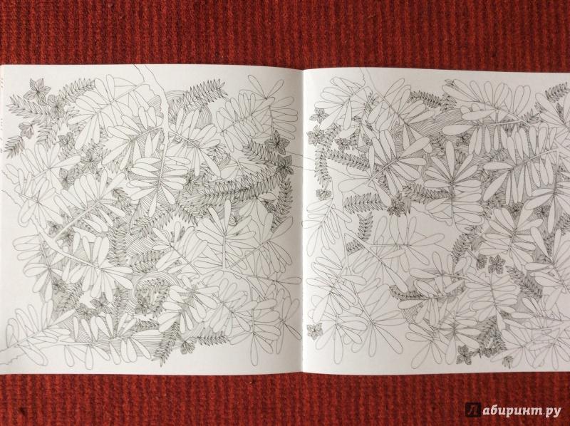 Иллюстрация 9 из 27 для Раскраска. Прятки-загадки ...