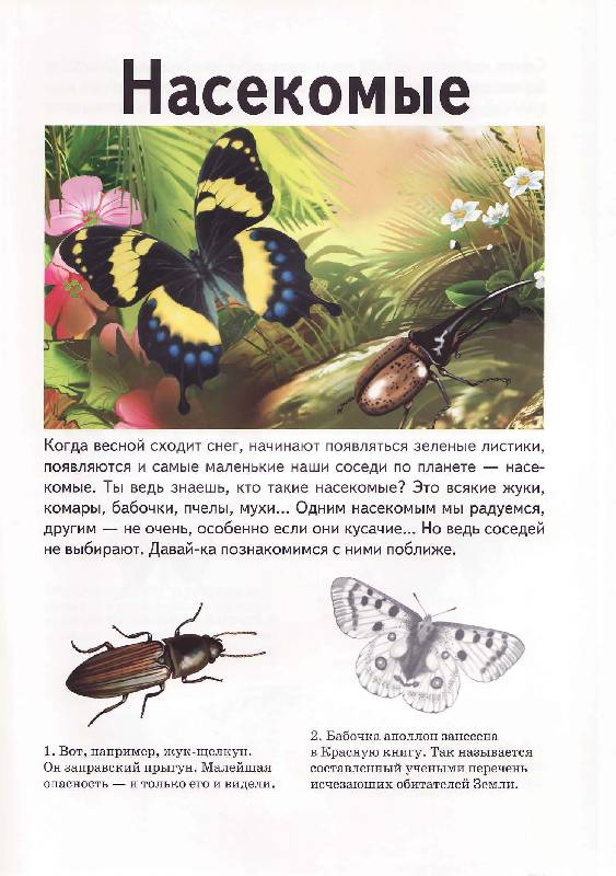 Иллюстрация 1 из 12 для Насекомые - Андрей Гришин | Лабиринт - книги. Источник: Р.  Светлана