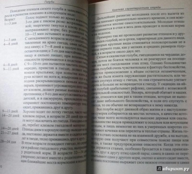 Иллюстрация 3 из 19 для Голуби. Обзор видов. Содержание. Кормление. Разведение - Александр Рахманов | Лабиринт - книги. Источник: SiB