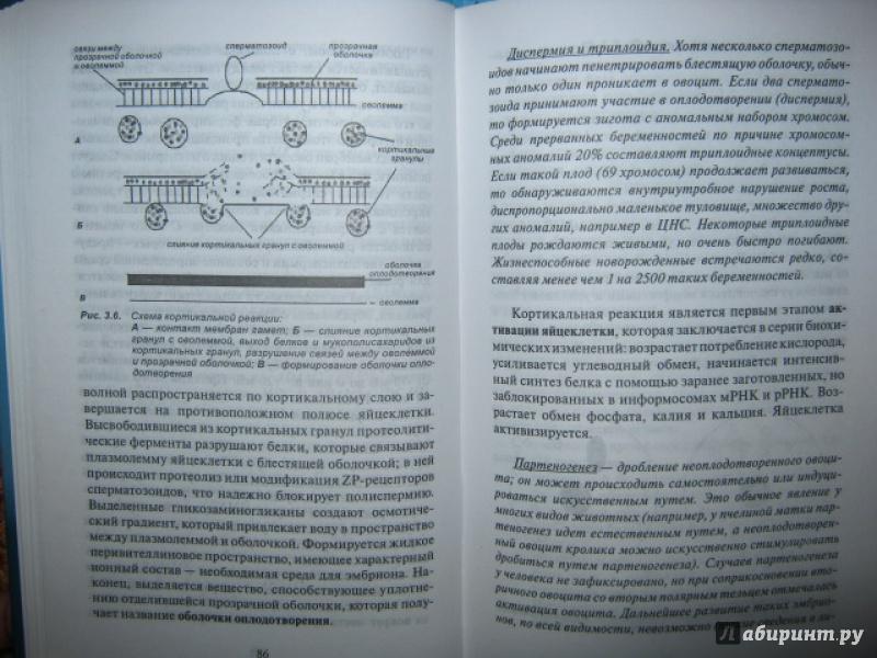 Иллюстрация 30 из 37 для Эмбриология. Учебное пособие - Студеникина, Слука | Лабиринт - книги. Источник: Евгения39
