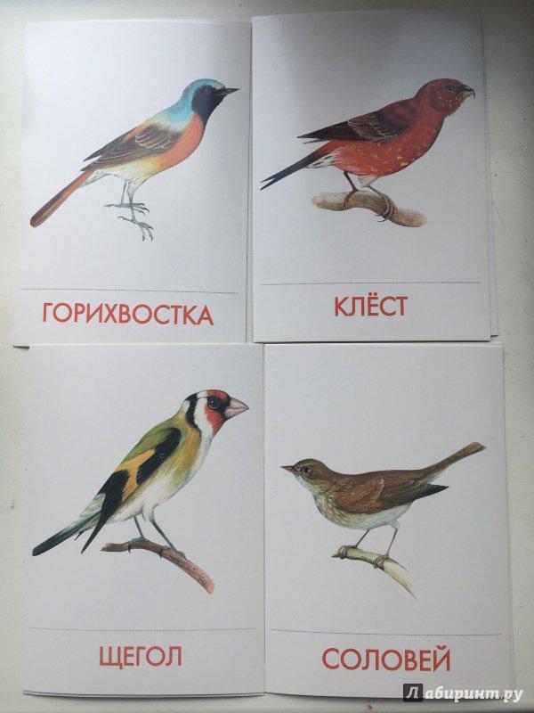 картинки с птиц наших лесов фотографиях