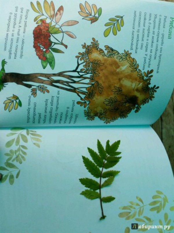 Иллюстрация 24 из 28 для Мой первый гербарий. Цветы и листья. ФГОС   Лабиринт - книги. Источник: peperin
