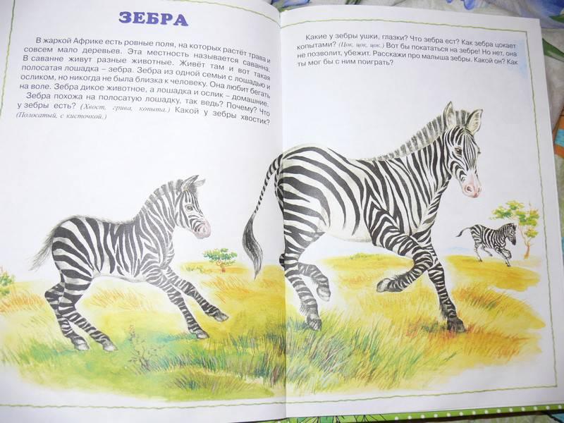 Иллюстрация 12 из 20 для О диких и домашних животных. 2-4 года | Лабиринт - книги. Источник: Irbis