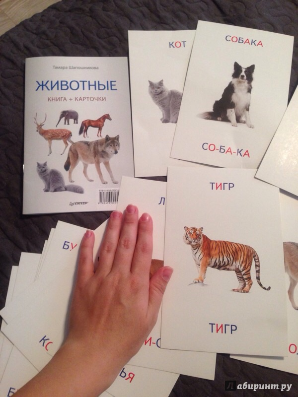 Иллюстрация 4 из 5 для Животные. Книга + карточки - Тамара Шапошникова | Лабиринт - игрушки. Источник: Ttoma
