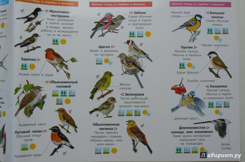 данном атлас птицы подмосковья фото с названиями одним самых