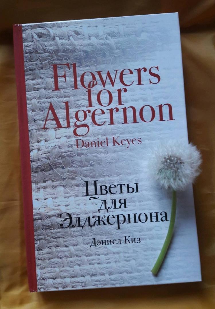 Цветы для элджернона картинки
