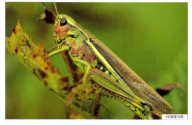 Иллюстрация 9 из 27 для Расскажите детям о насекомых - Э. Емельянова   Лабиринт - книги. Источник: С  М В