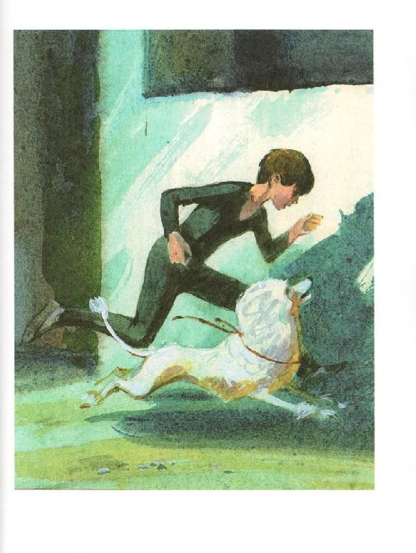картинки из книги белый пудель собраны