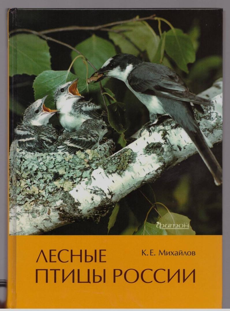 Иллюстрация 23 из 51 для Лесные птицы России - Константин Михайлов | Лабиринт - книги. Источник: LanaEr
