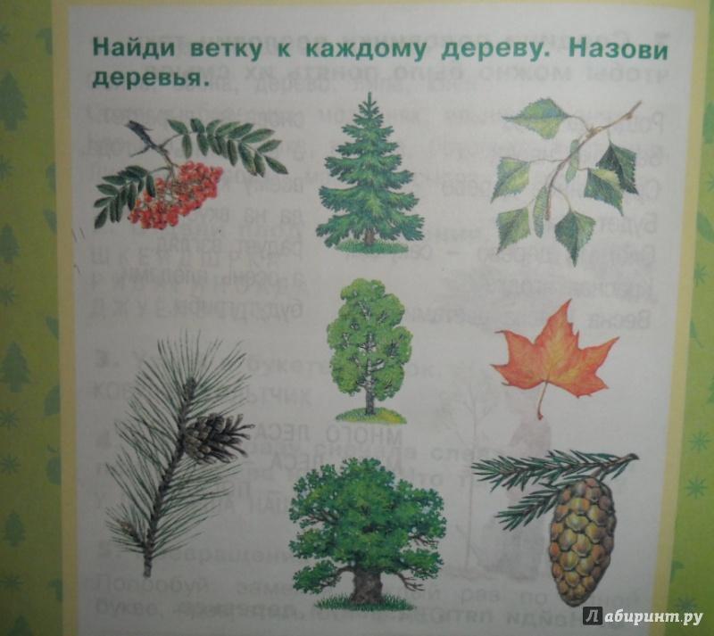 Иллюстрация 5 из 17 для Растения леса - Ольга Тишурина | Лабиринт - книги. Источник: Наталья