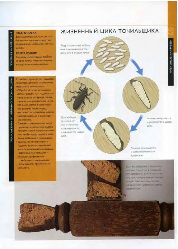 Иллюстрация 31 из 38 для Отделка древесины. Иллюстрированное руководство - Мик Аллен | Лабиринт - книги. Источник: Юта