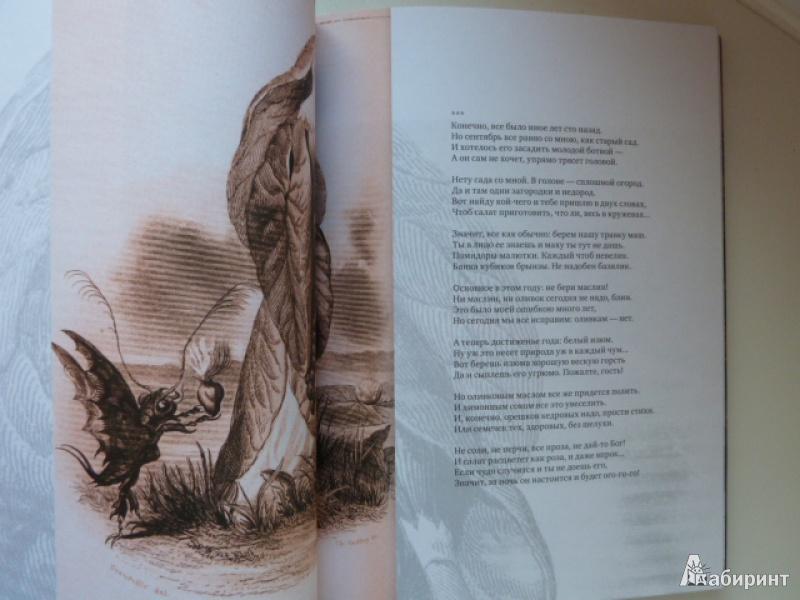 Иллюстрация 10 из 39 для Нормандская тетрадь - Вероника Долина | Лабиринт - книги. Источник: elenak