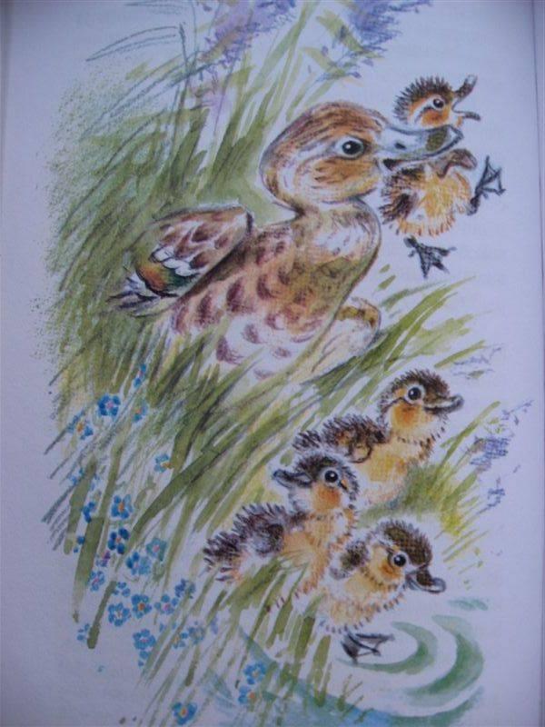 Иллюстрация 4 из 23 для Рассказы о животных - Бианки ...