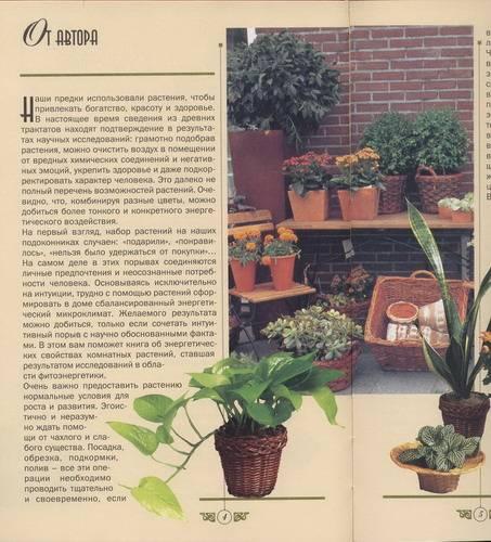 Иллюстрация 1 из 2 для Энергетика комнатных растений. Удивительные свойства любимых цветов - Джулия Крейсс   Лабиринт - книги. Источник: novela08