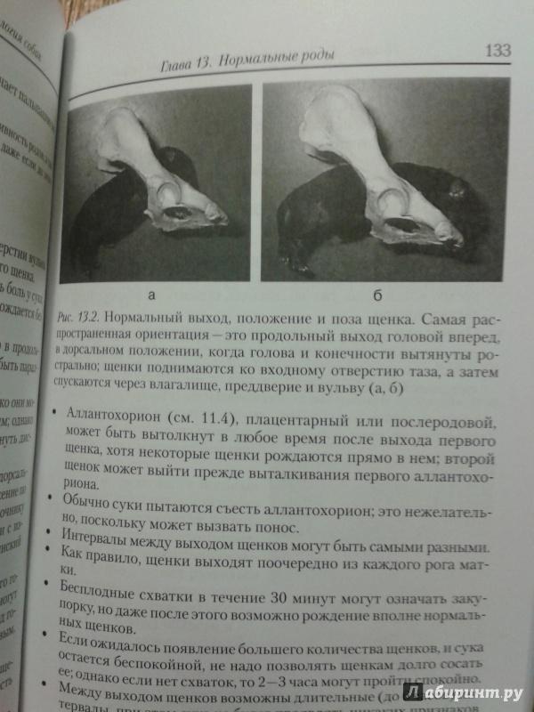 Иллюстрация 3 из 7 для Акушерство и гинекология собак - Гэри Инглэнд | Лабиринт - книги. Источник: Шнурок