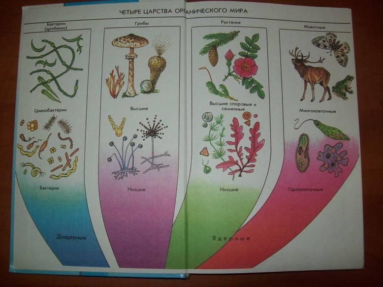 нами, биология животные растения картинки с названиями завивка волос крупные