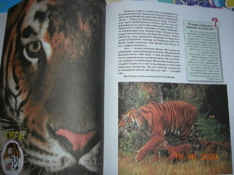 Иллюстрация 5 из 38 для Большая книга о животных для самых маленьких - Галина Шалаева   Лабиринт - книги. Источник: Соловей