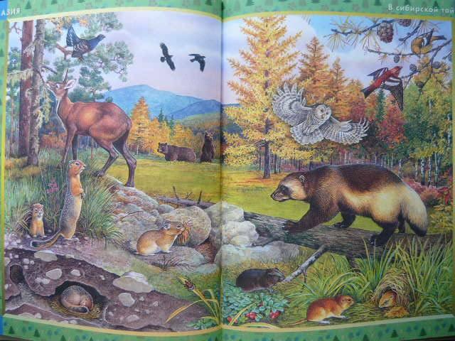 Иллюстрация 21 из 22 для Большая книга животных: Словарь в картинках | Лабиринт - книги. Источник: Катерина М.