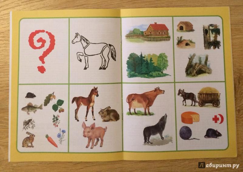 Дикие животные средней полосы картинки для детей